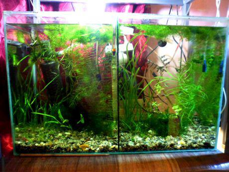 Another 7 litre tank for blizzard who is slowly growing back finnage after a failed spawn