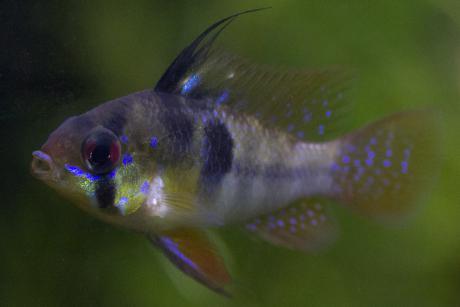 антибак 250 инструкция для лечения рыб