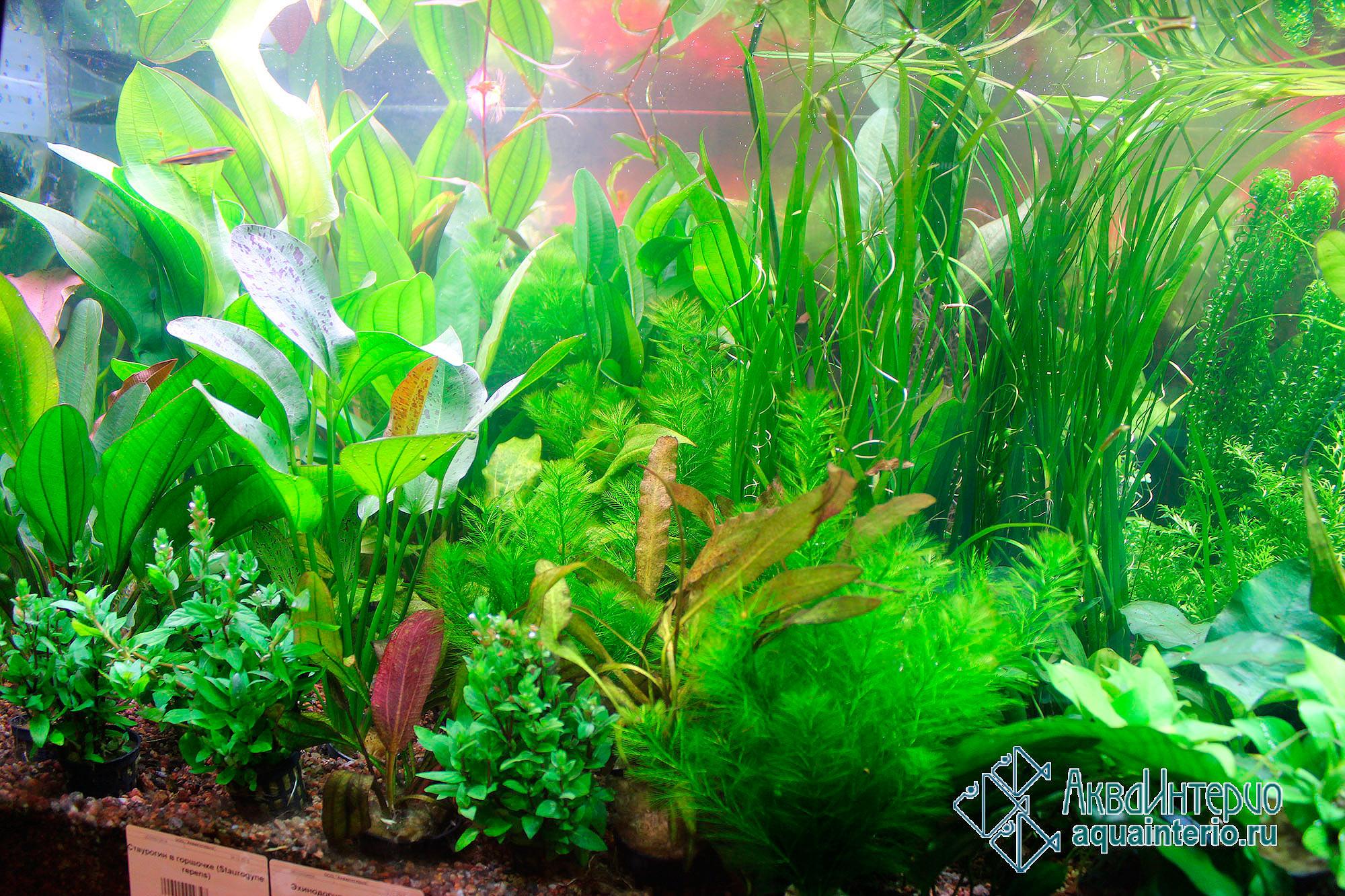 Купить аквариумные растения в санкт