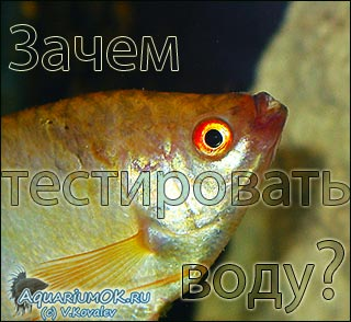 анализ (тестирование) воды в аквариуме