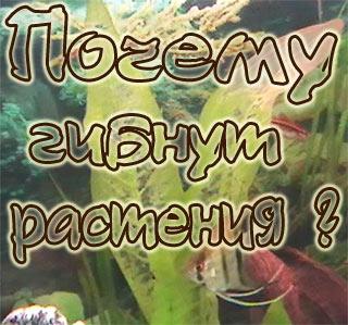 Почему гибнут растения в аквариуме? Подробный разбор причин.