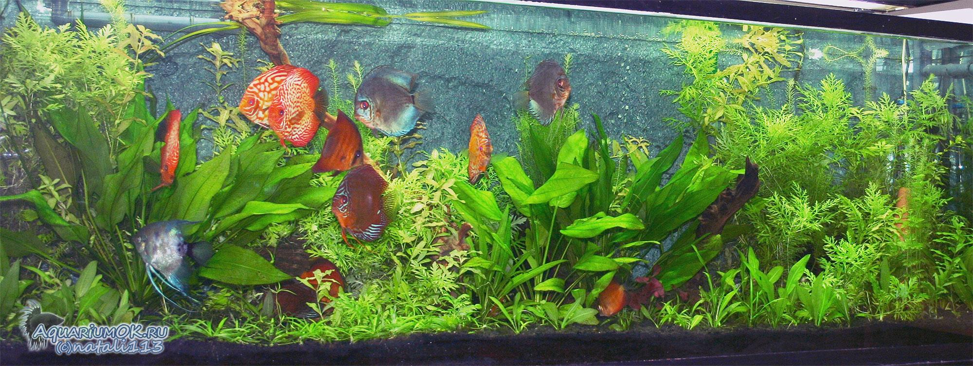 схема аквариум 200 литров
