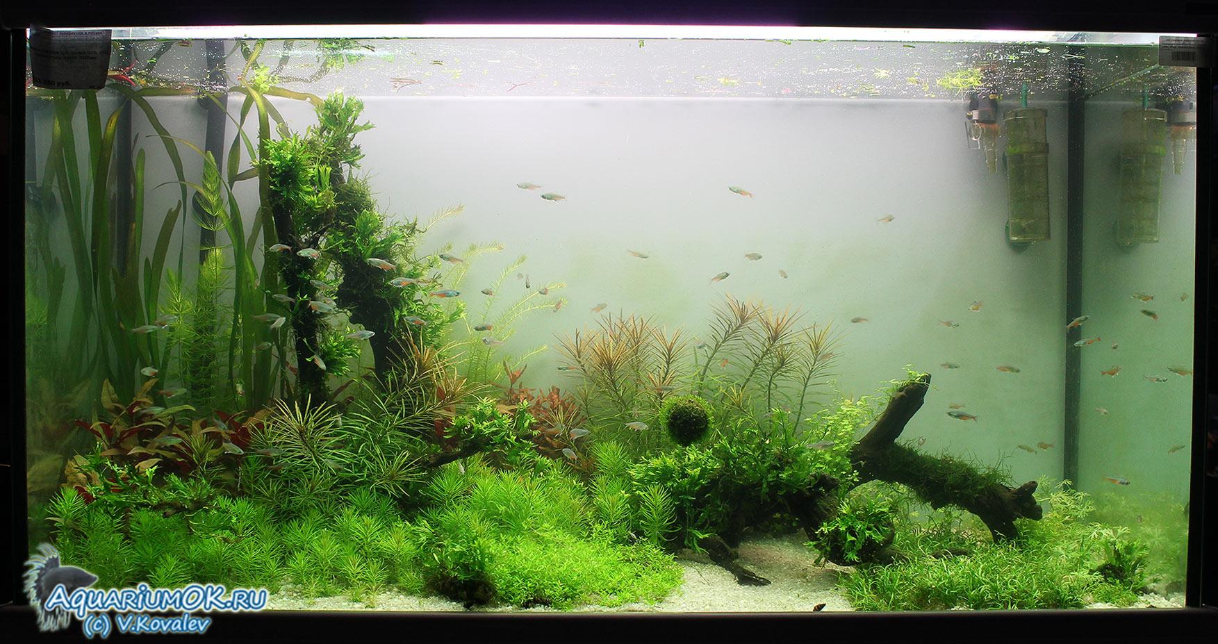 Какие растения можно посадить в аквариум - описание с фото 14
