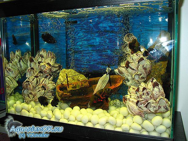 в картинки грунт аквариуме