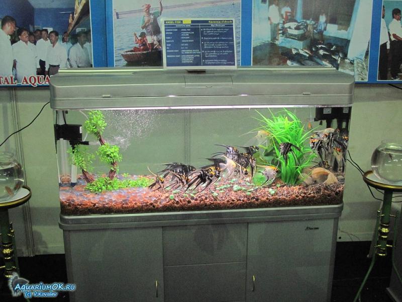 Дизайны аквариумов для скалярий